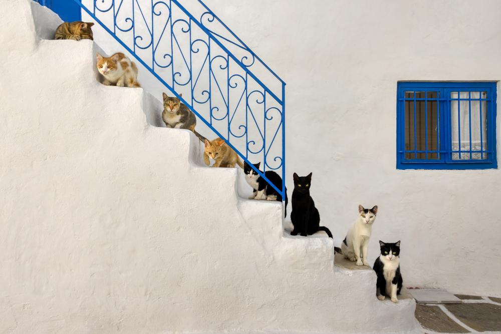 Pisici in Insulele Ciclade